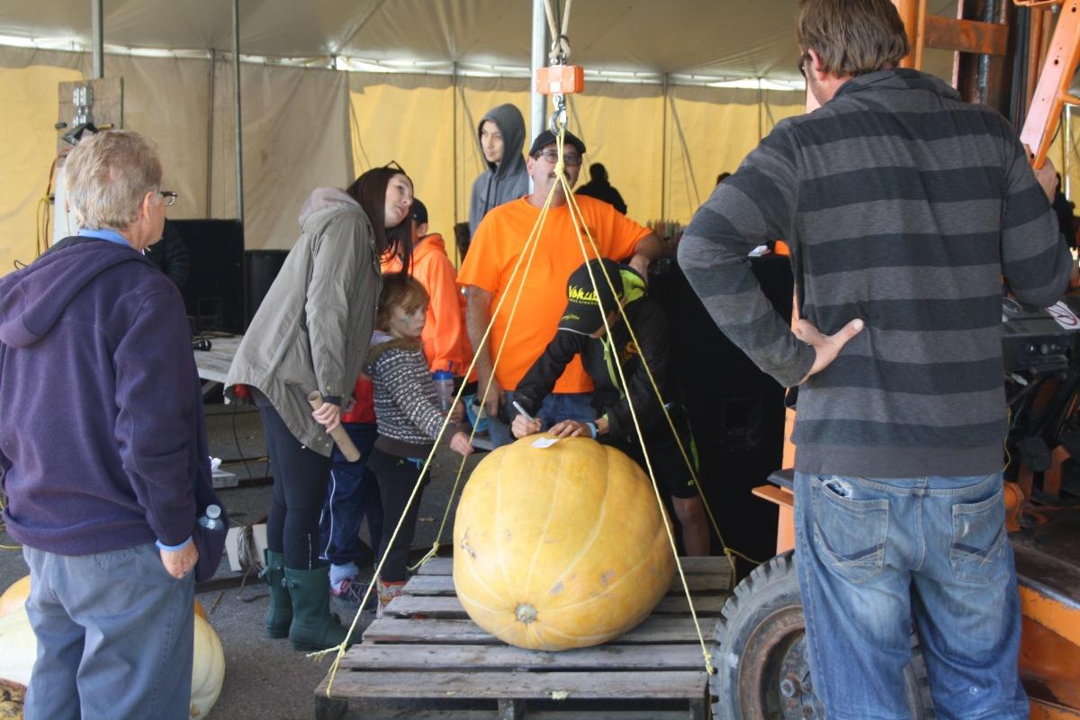 weighing pumpkin