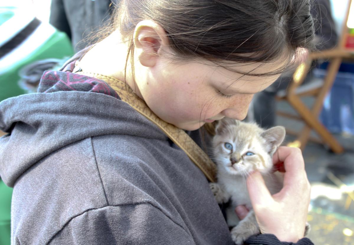 Spring Fever kitty