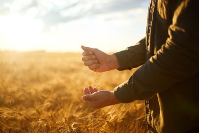 Grains higher, livestock mixed