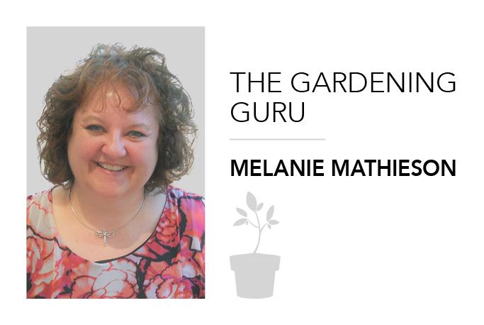 Tricking your vegetable garden