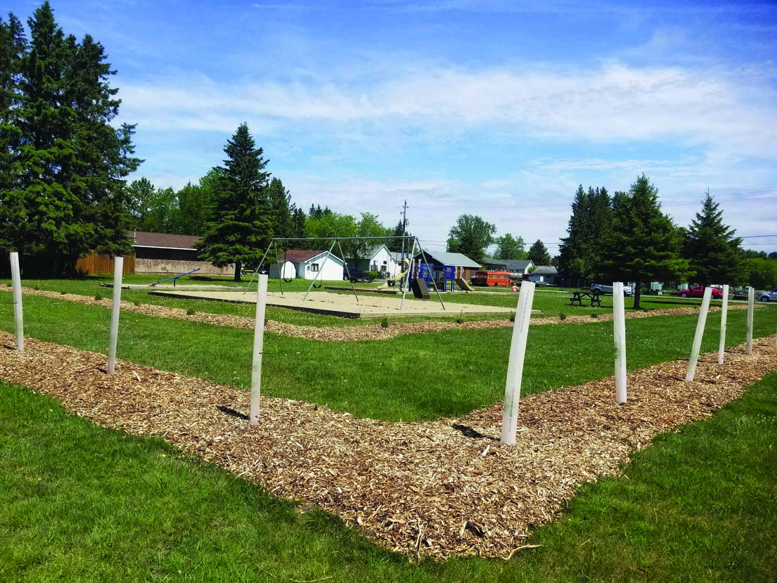 Town plants new trees at Phair, Lillie parks, with more planned